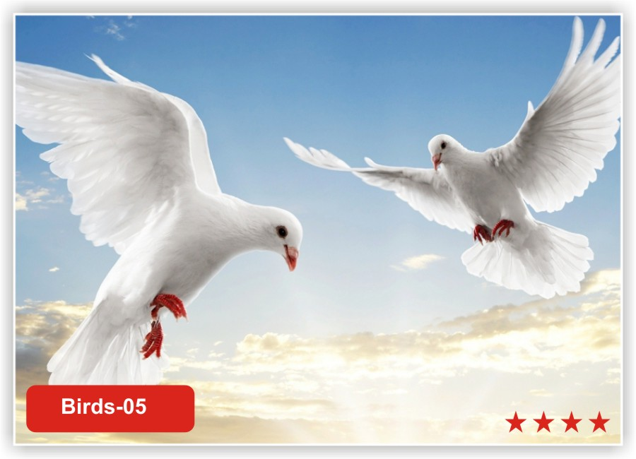 с птицами в небе