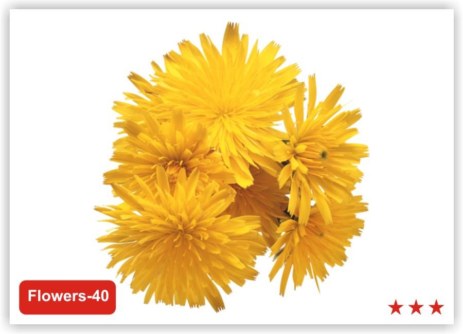 для фотопечати натяжных потолков цветы картинки