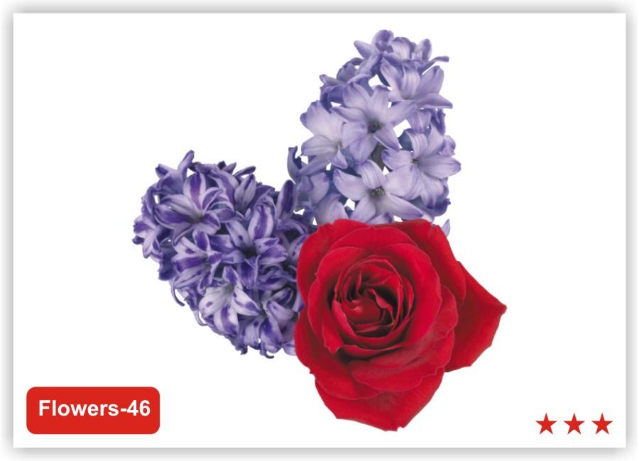 Заказать цветы с доставкой в санкт-петербурге красносельский район