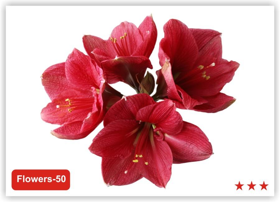 натяжных потолков цветы для фотопечати картинки